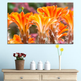 Flowers, Nature, Cactus » Orange, Brown, Gray