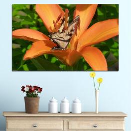 Природа, Цветя, Пеперуда » Зелен, Жълт, Оранжев, Кафяв, Черен