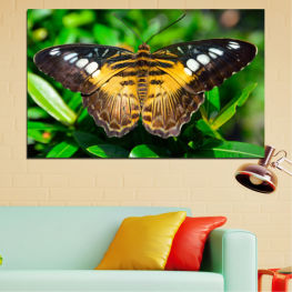 Animal, Nature, Butterfly » Green, Brown, Black, Dark grey