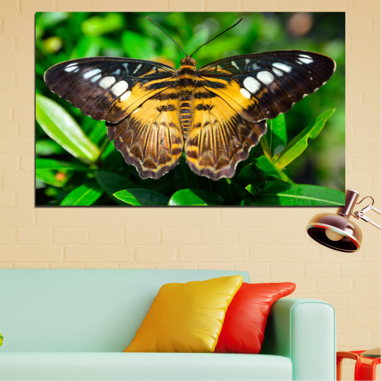 Canvas prints & wall decorative panels - 1 piece №0490 » Green, Brown, Black, Dark grey » Nature, Animal, Butterfly Form #1