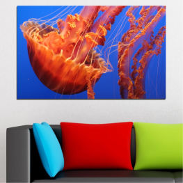 Animal, Water, Jellyfish » Red, Blue, Orange