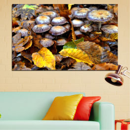 Nature, Autumn, Mushrooms » Brown, Black, Gray, Dark grey