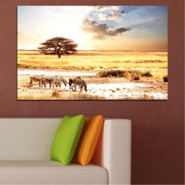 Животни, Африка, Зебра » Жълт, Оранжев, Сив, Бял, Бежов