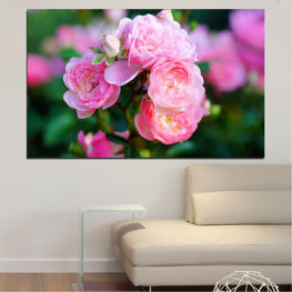 Flowers, Garden, Rose » Pink, Green, Black, Milky pink, Dark grey