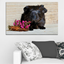 Animal, Portrait, Hamster » Black, Gray, Beige, Dark grey