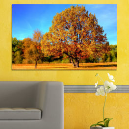 Nature, Landscape, Tree, Autumn » Turquoise, Yellow, Orange, Brown