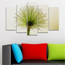 Flower, Spring, Plant, Herb » Green, White, Beige