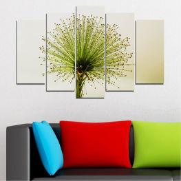 Цвете, Пролет, Растение, Билка » Зелен, Бял, Бежов