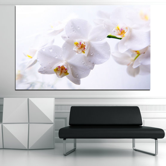 Canvas prints & wall decorative panels - 1 piece №0771 » Gray, White, Beige » Flower, Orchid, Delicate, White Form #1