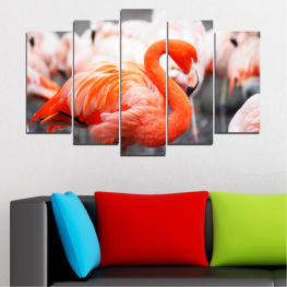 Africa, Birds, Flamingo » Orange, Gray, White, Beige, Dark grey