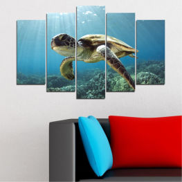 Landscape, Water, Sea, Turtle » Blue, Turquoise, Gray, Dark grey