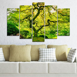 Nature, Tree, Forest » Green, Yellow, Black