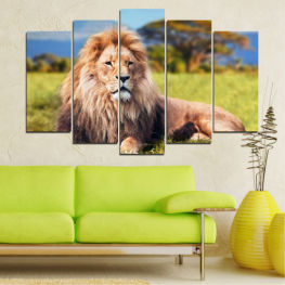 Nature, Animal, Lion » Blue, Green, Yellow, Brown, Gray, Beige, Dark grey