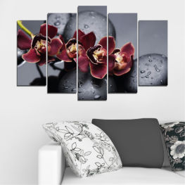 Orchid, Water, Drops, Stones » Red, Pink, Black, Gray, Dark grey