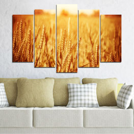 Sun, Autumn, Wheatear, Field » Yellow, Orange, Brown, Beige