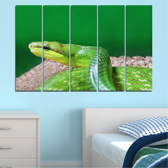 Canvas prints & wall decorative panels - 5 pieces №0178 » Green, Gray, Beige » Animal, Snake, Reptile Form #2
