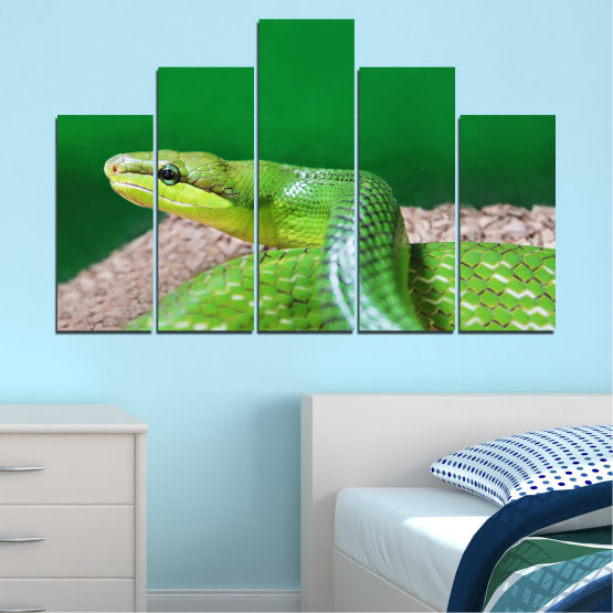 Canvas prints & wall decorative panels - 5 pieces №0178 » Green, Gray, Beige » Animal, Snake, Reptile Form #5