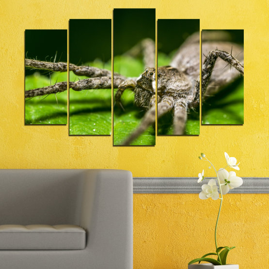 Canvas prints & wall decorative panels - 5 pieces №0200 » Green, Black, Gray, Dark grey » Nature, Animal, Spider Form #1