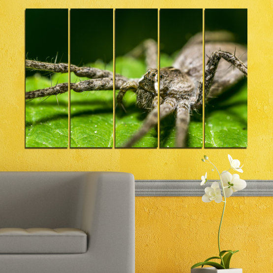 Canvas prints & wall decorative panels - 5 pieces №0200 » Green, Black, Gray, Dark grey » Nature, Animal, Spider Form #2