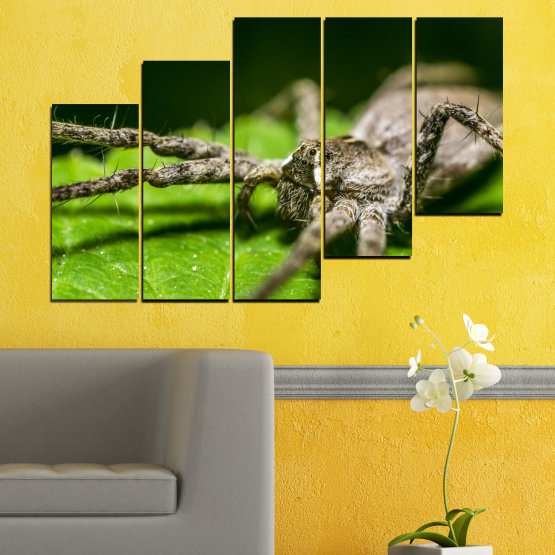 Canvas prints & wall decorative panels - 5 pieces №0200 » Green, Black, Gray, Dark grey » Nature, Animal, Spider Form #8