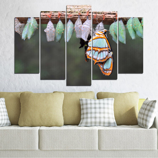 Canvas prints & wall decorative panels - 5 pieces №0207 » Blue, Green, Orange, Gray, Beige, Dark grey » Nature, Animal, Butterfly Form #1