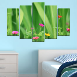 Flowers, Nature, Meadow » Green, Gray