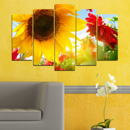 Flowers, Sun, Sunflower, Garden » Red, Yellow, Orange, Brown, Gray, White