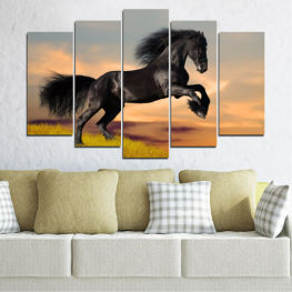 Animal, Animals, Horse, Meadow, Grass, Black » Orange, Black, Gray, Beige, Dark grey