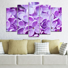 Nature, Flowers, Lilac » Purple, Gray, White