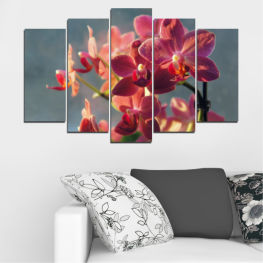 Flowers, Orchid, Bouquet » Red, Pink, Brown, Gray, Dark grey