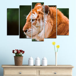 Animal, Portrait, Tiger » Green, Orange, Brown, Black