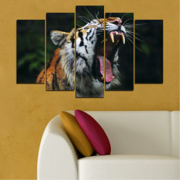 Animal, Portrait, Tiger » Brown, Black, Gray, Dark grey