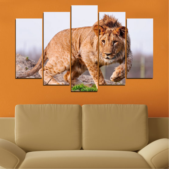Canvas prints & wall decorative panels - 5 pieces №0295 » Orange, Brown, Gray, White, Beige » Animal, Portrait, Lion Form #1