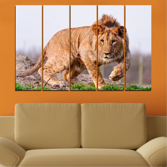 Canvas prints & wall decorative panels - 5 pieces №0295 » Orange, Brown, Gray, White, Beige » Animal, Portrait, Lion Form #2
