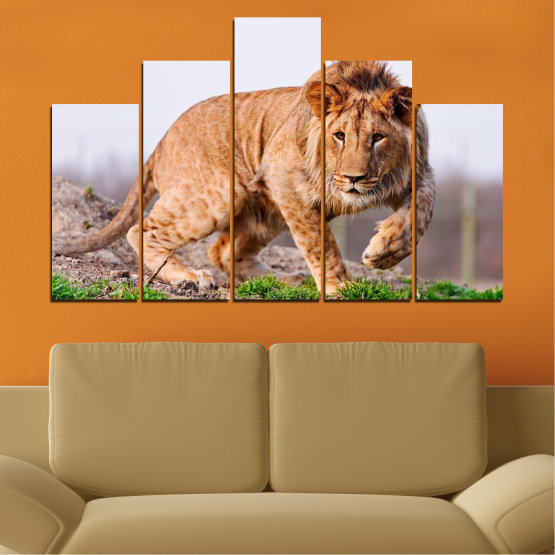 Canvas prints & wall decorative panels - 5 pieces №0295 » Orange, Brown, Gray, White, Beige » Animal, Portrait, Lion Form #5