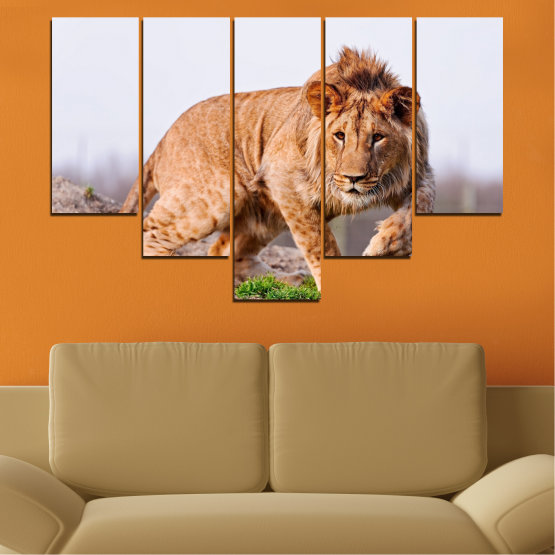 Canvas prints & wall decorative panels - 5 pieces №0295 » Orange, Brown, Gray, White, Beige » Animal, Portrait, Lion Form #6
