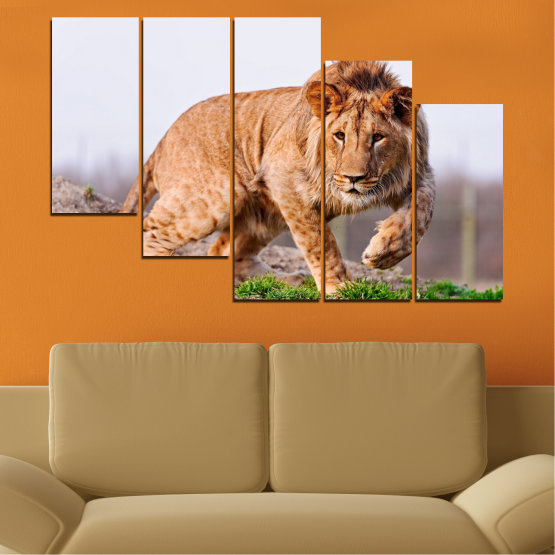 Canvas prints & wall decorative panels - 5 pieces №0295 » Orange, Brown, Gray, White, Beige » Animal, Portrait, Lion Form #7