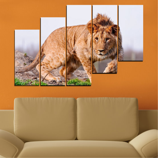 Canvas prints & wall decorative panels - 5 pieces №0295 » Orange, Brown, Gray, White, Beige » Animal, Portrait, Lion Form #8