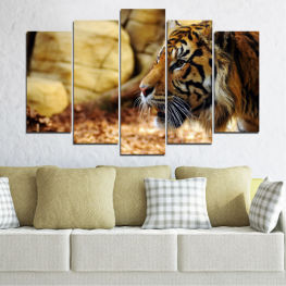 Animal, Rocks, Tiger » Green, Brown, Black, Beige