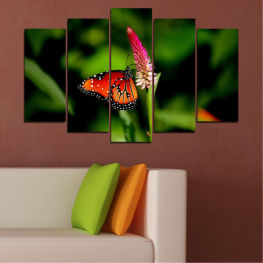 Nature, Flowers, Butterfly » Red, Green, Black