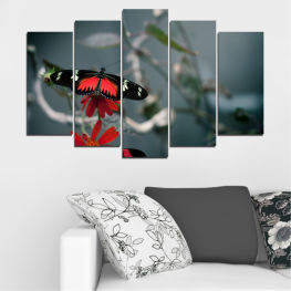 Water, Animal, Butterfly, Reflection » Red, Black, Gray, Dark grey