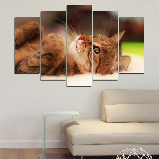 Canvas prints & wall decorative panels - 5 pieces №0377 » Brown, White, Beige, Dark grey » Animal, Portrait, Cat Form #1