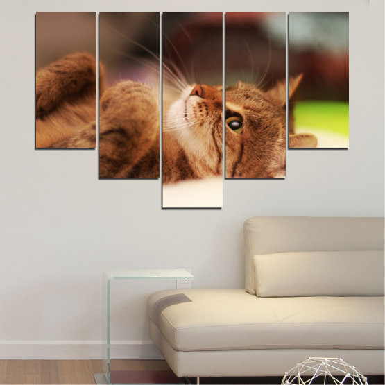 Canvas prints & wall decorative panels - 5 pieces №0377 » Brown, White, Beige, Dark grey » Animal, Portrait, Cat Form #6