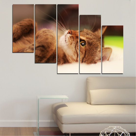 Canvas prints & wall decorative panels - 5 pieces №0377 » Brown, White, Beige, Dark grey » Animal, Portrait, Cat Form #7