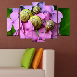 Animal, Flowers, Snail » Purple, Green, Gray, Milky pink