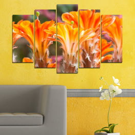 Nature, Flowers, Cactus » Orange, Brown, Gray