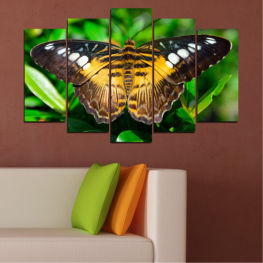 Nature, Animal, Butterfly » Green, Brown, Black, Dark grey
