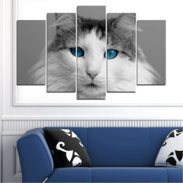 Animal, Portrait, Cat » Black, Gray, White, Dark grey
