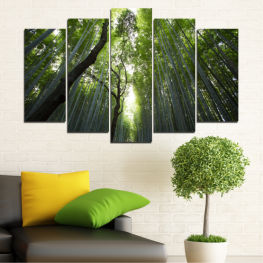 Landscape, Nature, Freshness, Forest » Green, Black