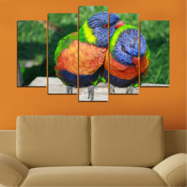 Colorful, Birds, Parrot » Green, Gray, Dark grey